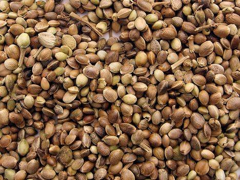Семена