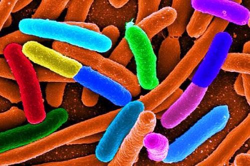 проявления дисбактериоза