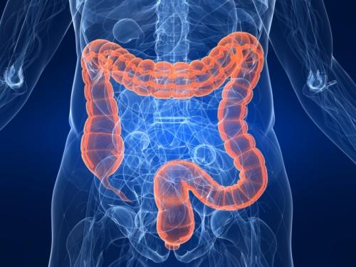 Роль толстого кишечника в организме